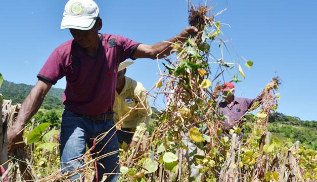 Siembra-economia-cultivo