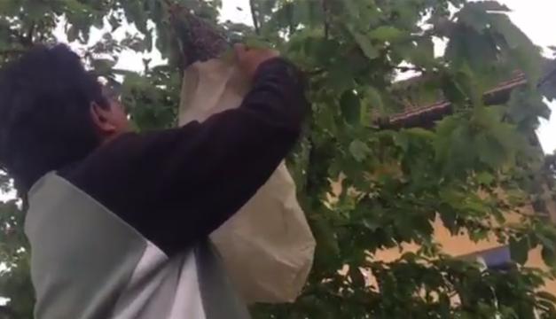 abejas en suiza