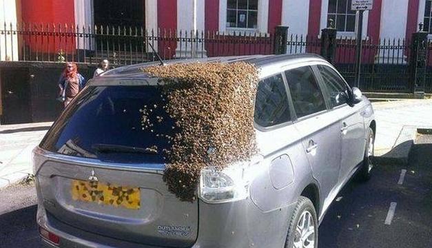carro con abejas-ABC