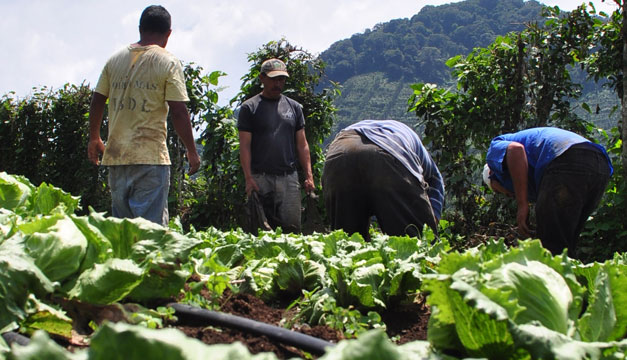 cultivo-hortaliza-productores
