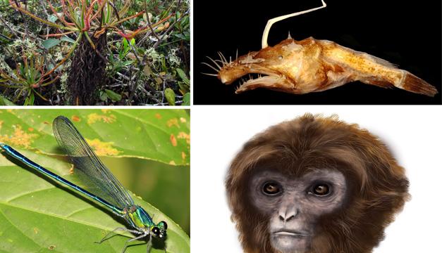 nuevas especies-efe