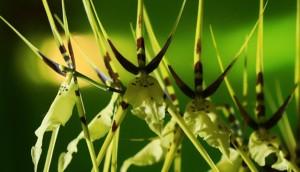 orquideas-EFE