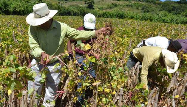 Agricultura-cultivo