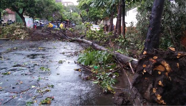 Fotografía: Estragos de lluvias de esta tarde. Archivo Diario El Mundo.