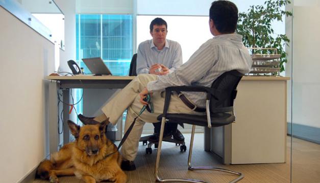 Día Mundial del Perro en la Oficina