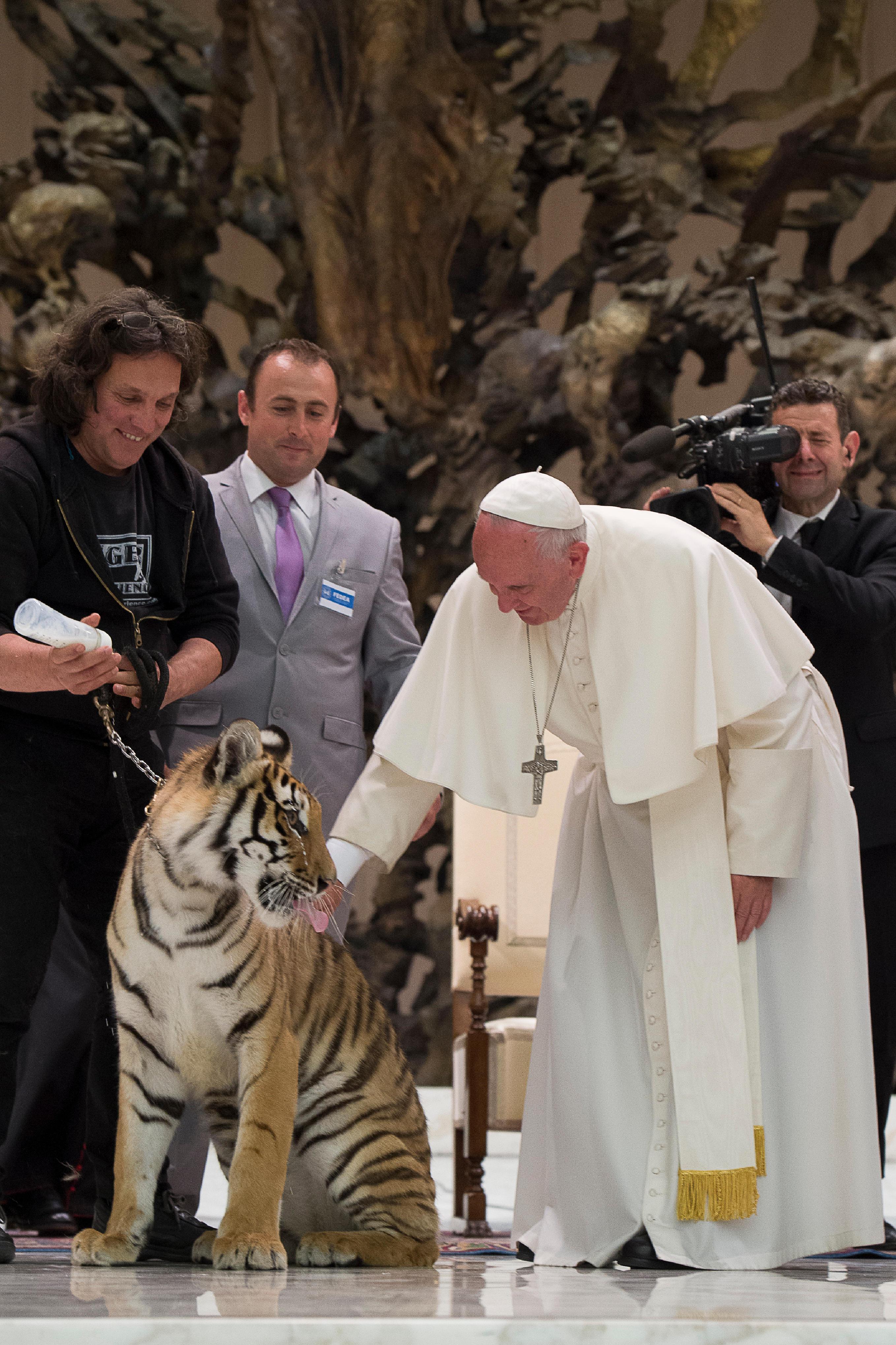 """(160616) -- ROMA, junio 16, 2016 (Xinhua) -- El papa Francisco (d-frente) acaricia a un tigre durante su audiencia con los participantes del jubileo del """"mundo del espectáculo viajante"""", en la Ciudad del Vaticano, en Roma, Italia, el 16 de junio de 2016. (Xinhua/Giuseppe Ciccia/Pacific Press/ZUMAPRESS) (da) (dp)"""