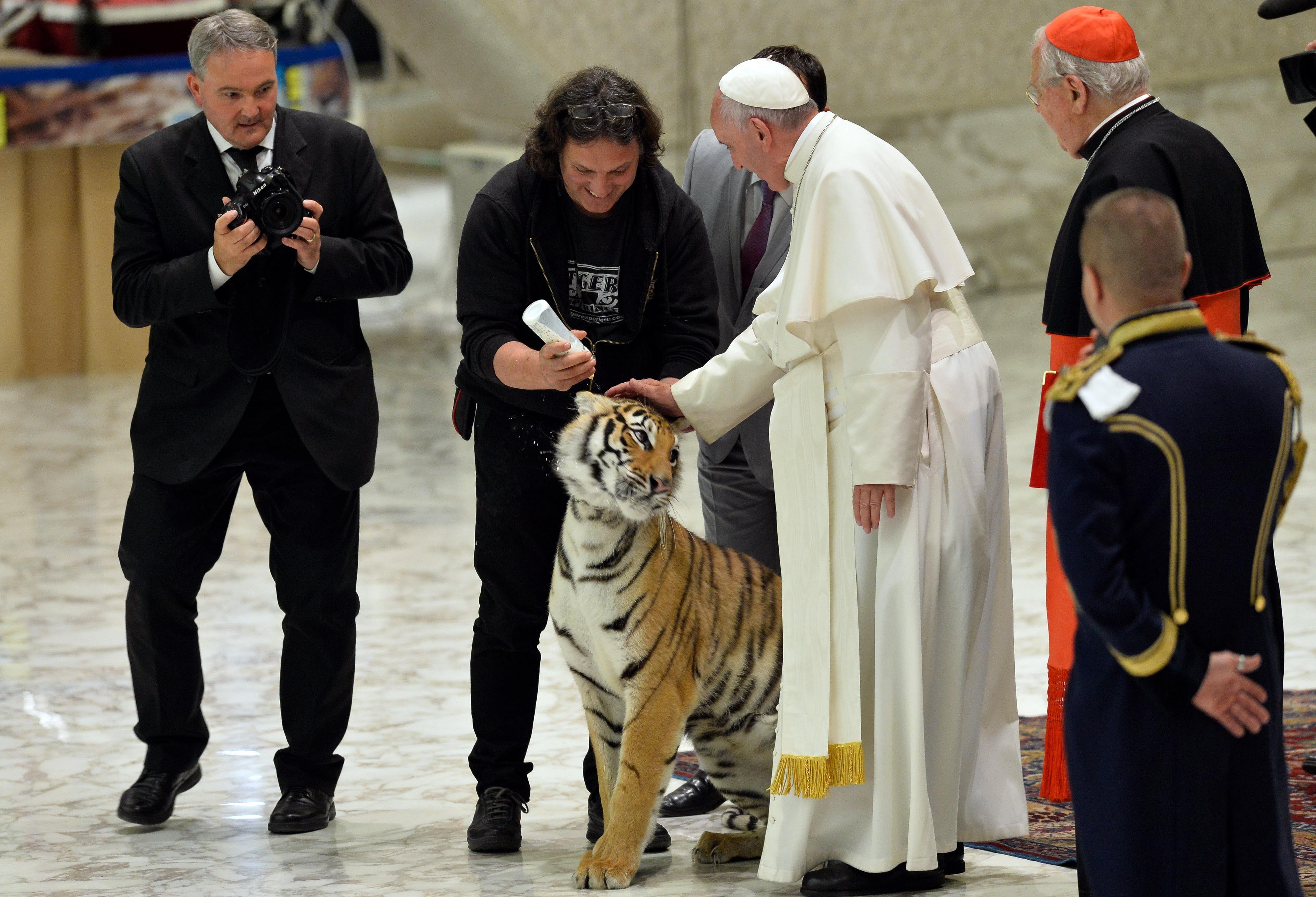 """(160616) -- ROMA, junio 16, 2016 (Xinhua) -- El papa Francisco (2-d) acaricia a un tigre durante su audiencia con los participantes del jubileo del """"mundo del espectáculo viajante"""", en la Ciudad del Vaticano, en Roma, Italia, el 16 de junio de 2016. (Xinhua/Giuseppe Ciccia/Pacific Press/ZUMAPRESS) (da) (dp)"""