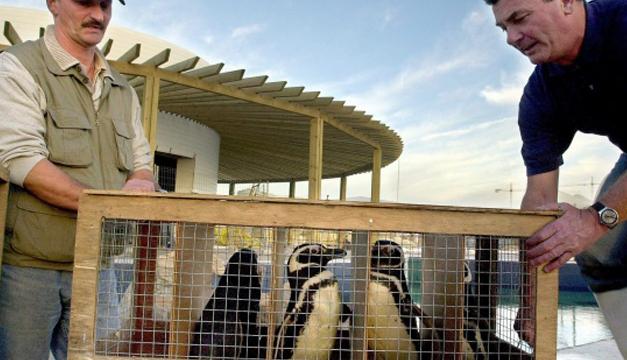 Pinguinos Juanito