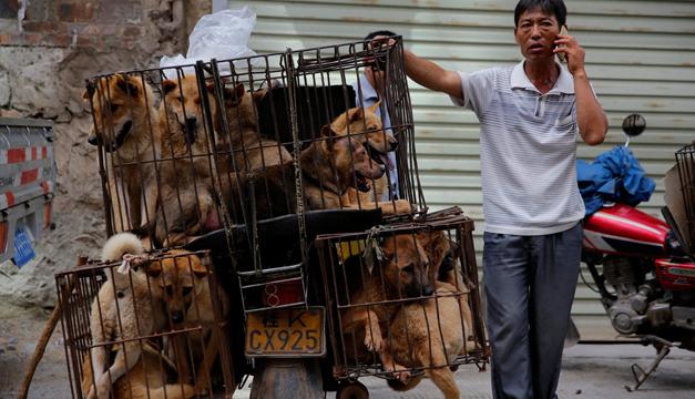 festival de perros en china-efe