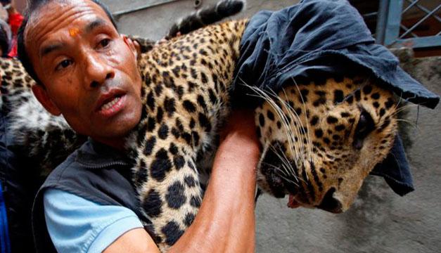 leopardo-efe
