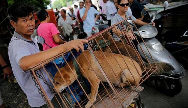 perros en china-efe