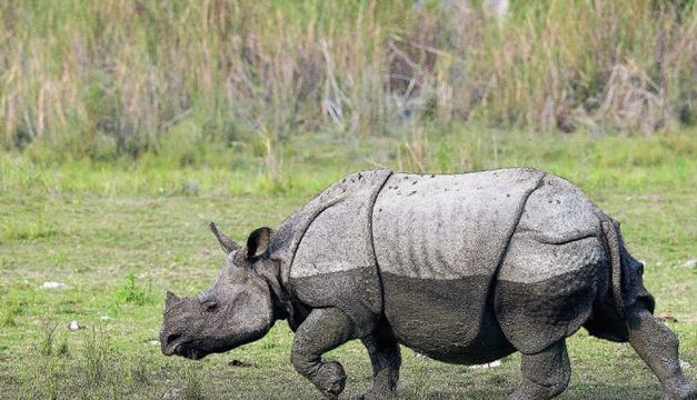 rinocerente-efe