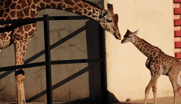 zoo-Buenos-Aires-