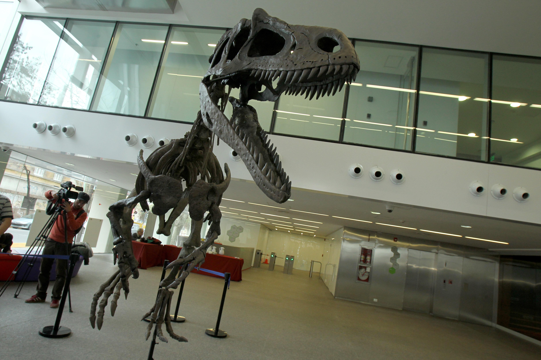 BAS001. BUENOS AIRES (ARGENTINA), 13/07/2016.- Vista de hoy, 13 de julio de 2016, de la presentación de Gualicho shinyae, un insólito dinosaurio carnívoro que habitó en la Patagonia Argentina durante el periodo Cretácico Superior, en un evento realizado en Buenos Aires. Gualicho, un ejemplar fósil de un insólito dinosaurio carnívoro procedente de la Patagonia argentina, fue presentado después de un accidentado periplo en el que el esqueleto, hallado en 2007, incluso llegó a desaparecer tras volcar un camión que llevaba a los paleontólogos. EFE/Alberto Ortiz