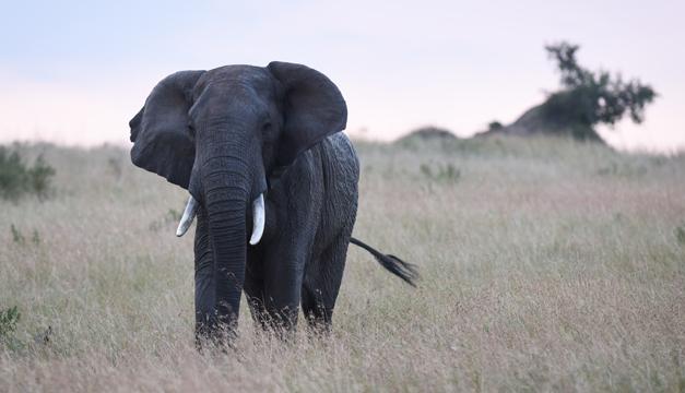 elefante-xinhua