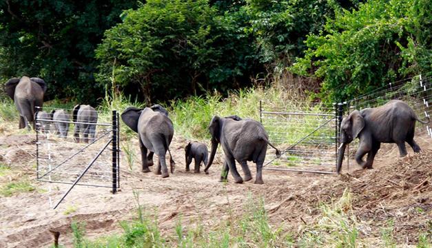 elefantes-africa-2