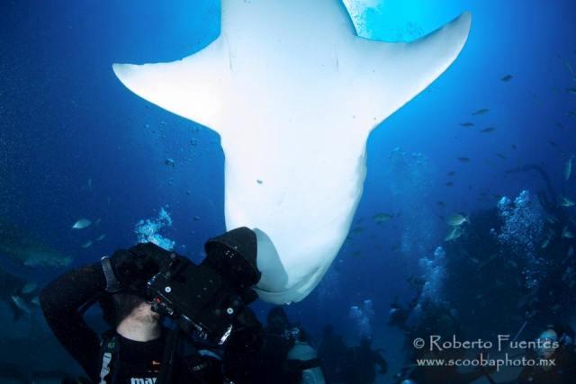 facebook-gerado villar-tiburon
