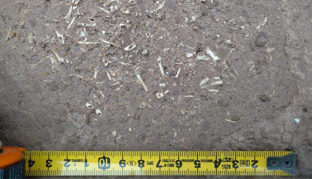 fosil argentina-efe