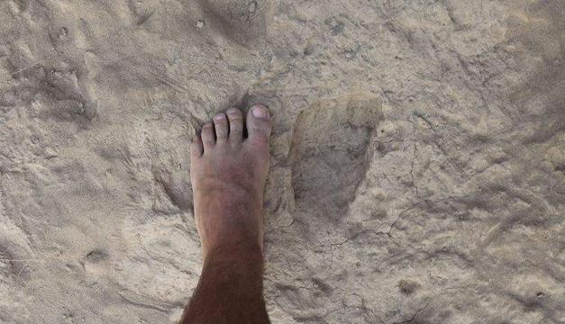 pie-homo-erectus