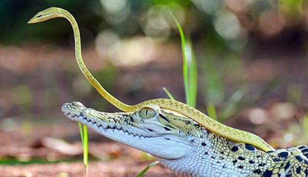 reptiles-xinhua