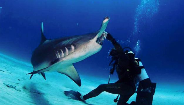 tiburon mexico-face