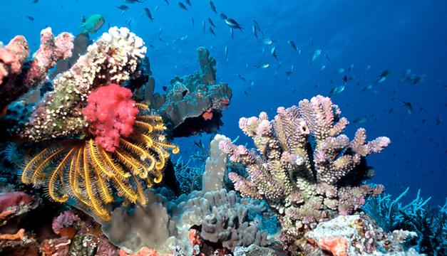 Arrecifes-de-coral-de-Maldivas