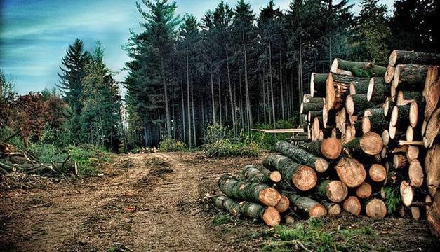 Deforestacion-Peten