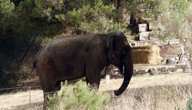 Elefanta-Dumba
