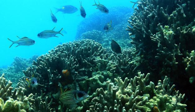 arrecife-xinhua