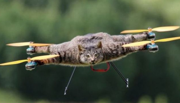 gato-dron