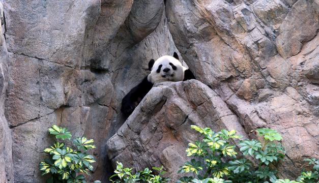 oso panda-xinhua