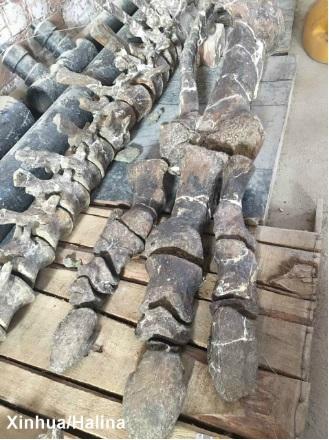 restos de hidrosaurio-xinhua1