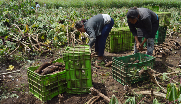 agriculturos-caluco