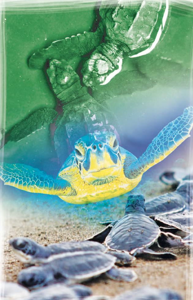 liberacion-tortugas