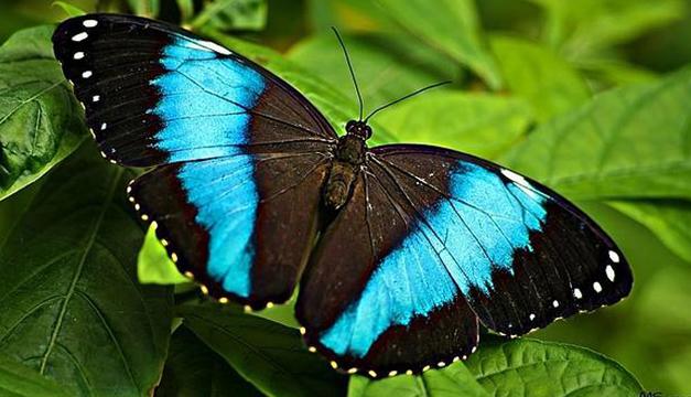 Mariposas-del-Mediterraneo