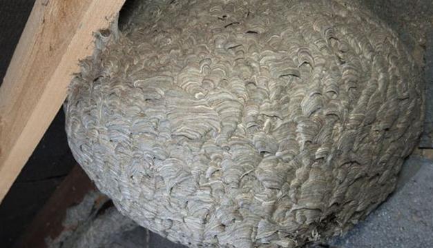 nido-de-abeja-2