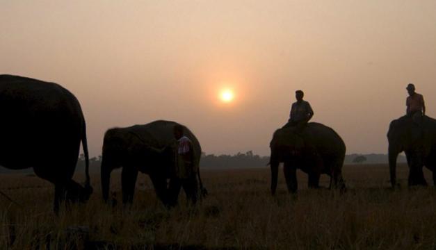 elefantes-africanos
