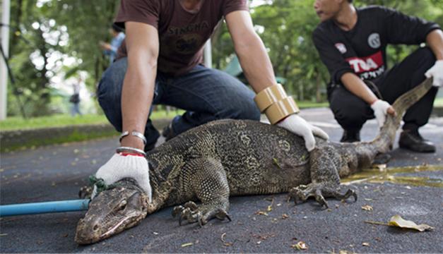 lagartos-bangkok