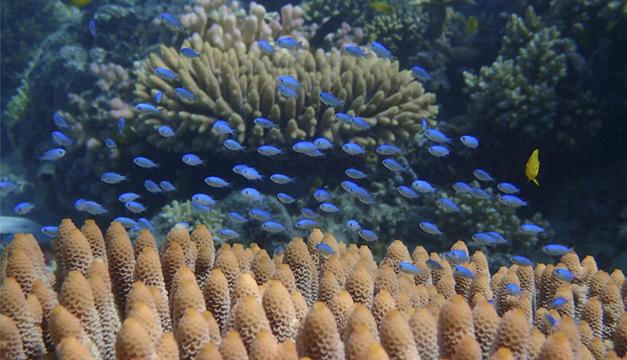peces-coralinos-australia
