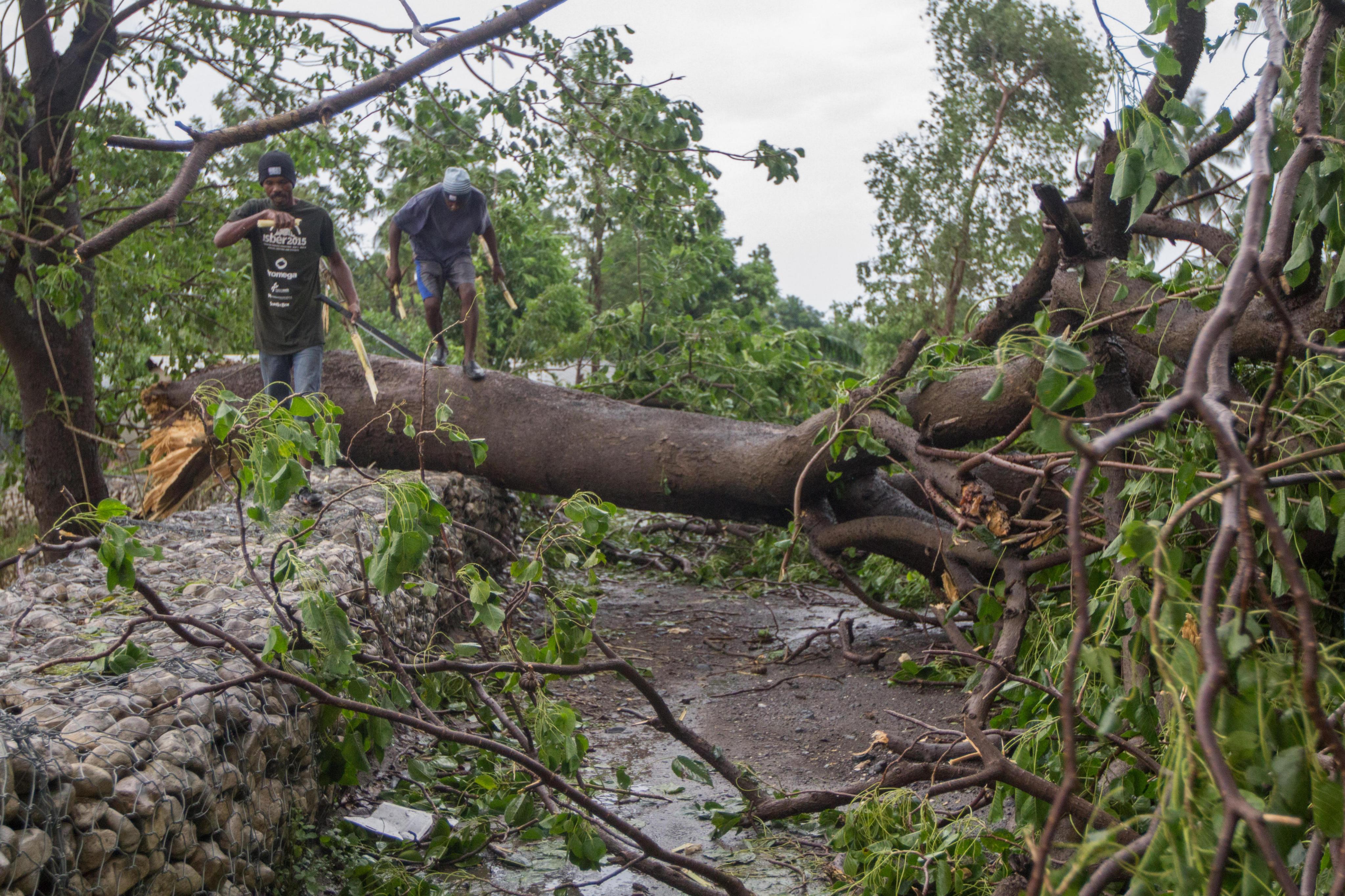 HAI01 - FREDRIK (HAITÍ), 10/05/2016- Dos hombres pasan sobre un árbol caído hoy, miércoles 5 de octubre de 2016, un día después del paso del huracán Matthew en la población de Fredrik (Haití). El huracán Matthew tocó tierra ayer en Haití dejando a su paso al menos nueve muertos, miles de desplazados y comunidades incomunicadas, principalmente en el suroeste de la nación caribeña. EFE/ Bahare Khodabande