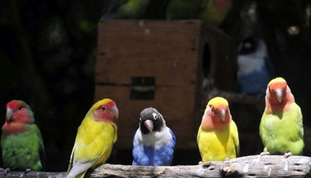 aves-mundo-tierra