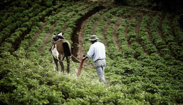 siembra-cultivo
