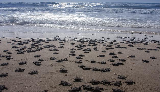 tortugas-liberacion-efe