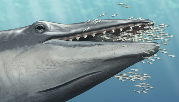fosil-ballena