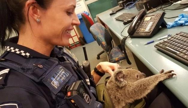 koalados