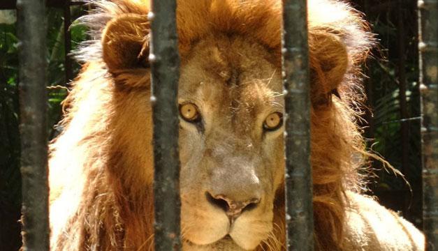 leon-costa-rica