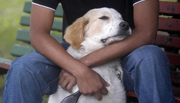 mascota-perro