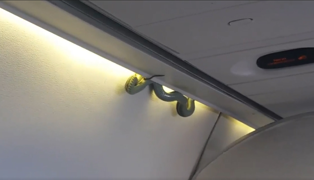 serpiente-vuelo