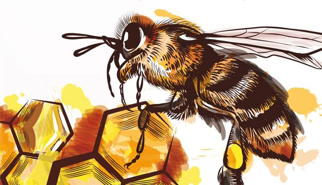 abeja-miel