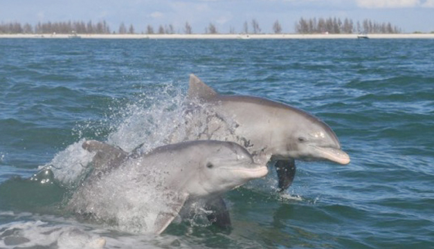 delfines-de-costas-de-los-eveglades